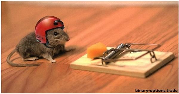 rat falling scam
